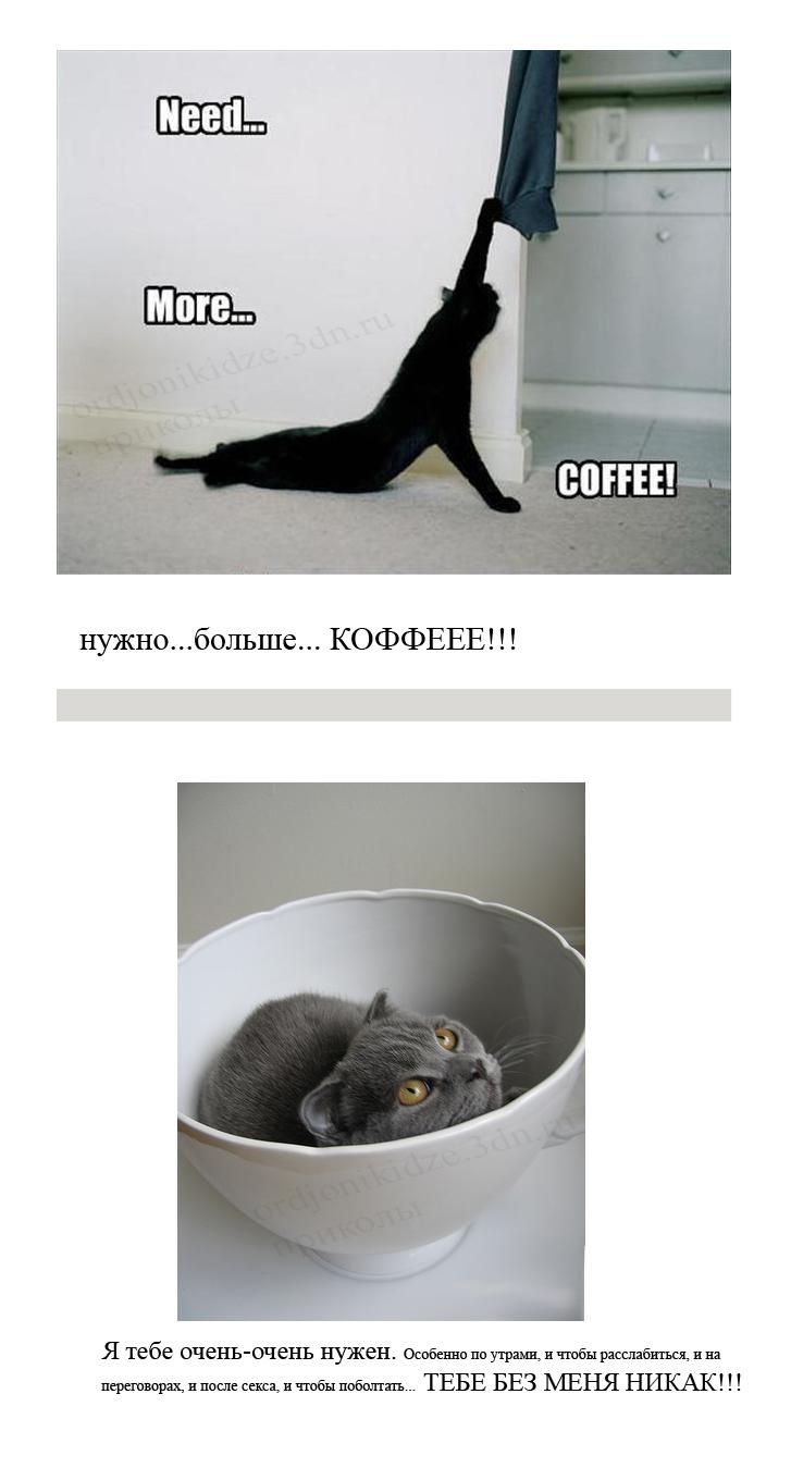 приколы сайта Орджоникидзе котэ кофе утро