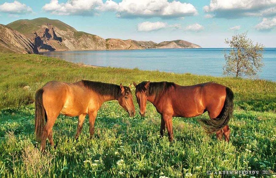 Орджонтикидзе Крым конная прогулка майские праздники