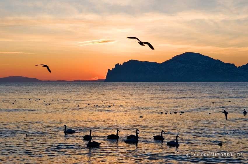 Орджоникидзе Крым закат лебеди