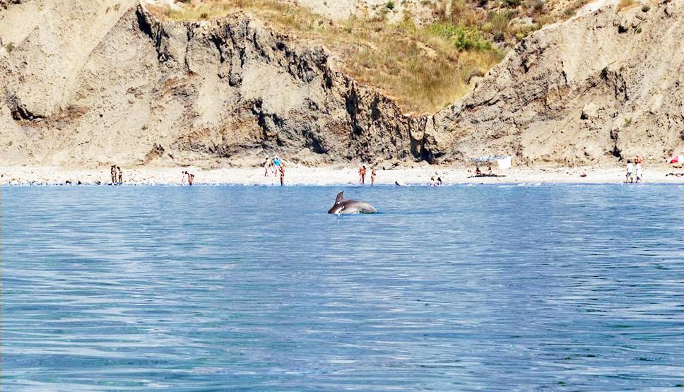 Пляжи Орджоникидзе Крым дельфины